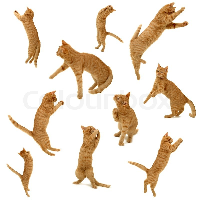 August Jobs Figures >> Collection of jumping kittens in action. On white background. 3500 x 3500 pixels. | Stock Photo ...