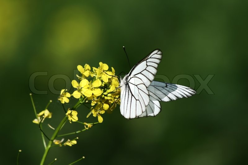 white butterfly on a flower stock photo colourbox