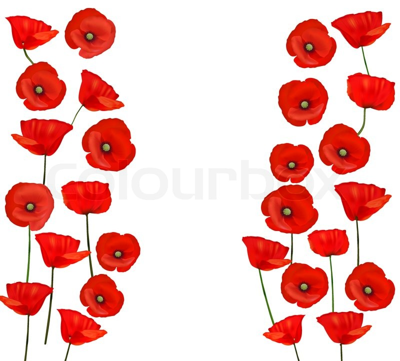 background with beautiful red poppies vector illustration