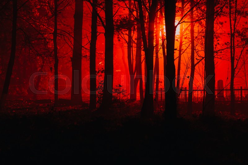 Scary Foggy Forest. Silhouettes Of Trees In The Red Light