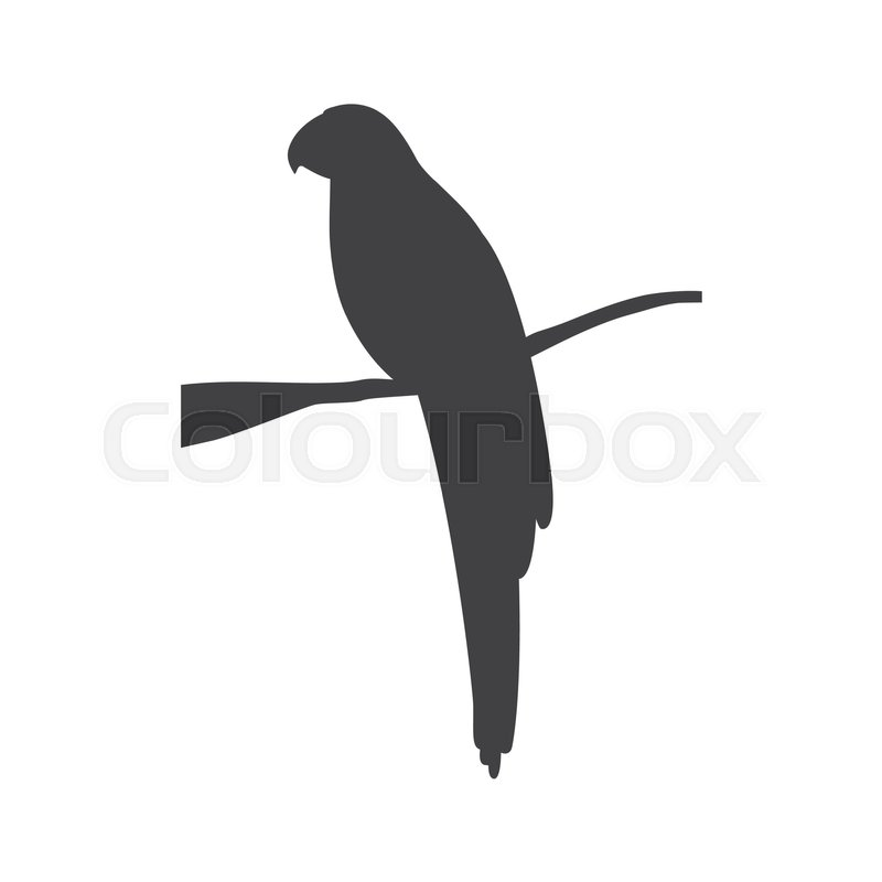 Silhouette with parrot tropical animal vector illustration, vector