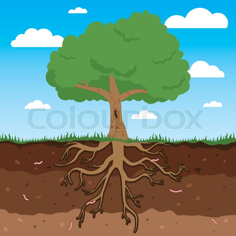 Tree With Roots And Leafs Above And Stock Vector Colourbox Collection of cartoon tree with branches (28) tree with roots and apples tree cartoon drawing tree with roots and leafs above and