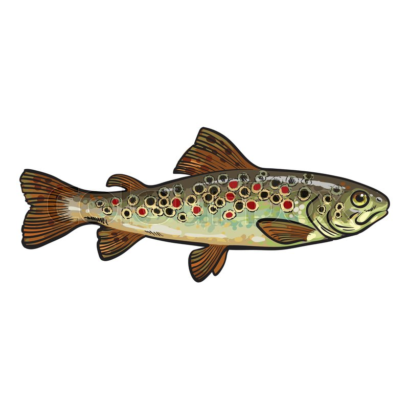 Trout Internal Diagram - DIY Enthusiasts Wiring Diagrams •