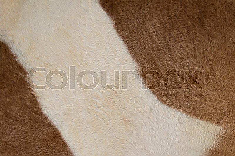 Horse fur background. Fur skins of horses, stock photo