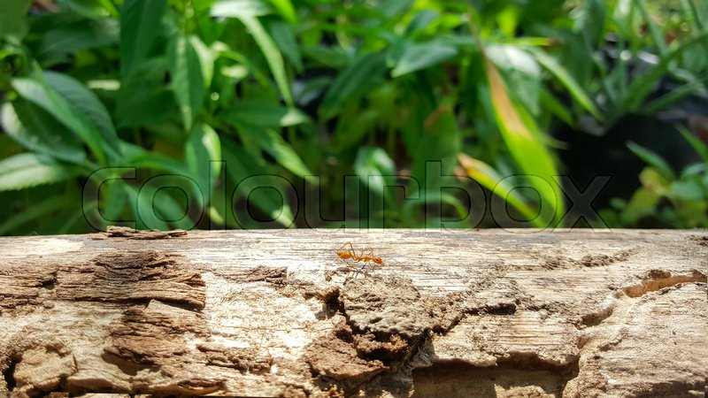 Ant running and work on old wood bridge with sunlight , green nature background, stock photo