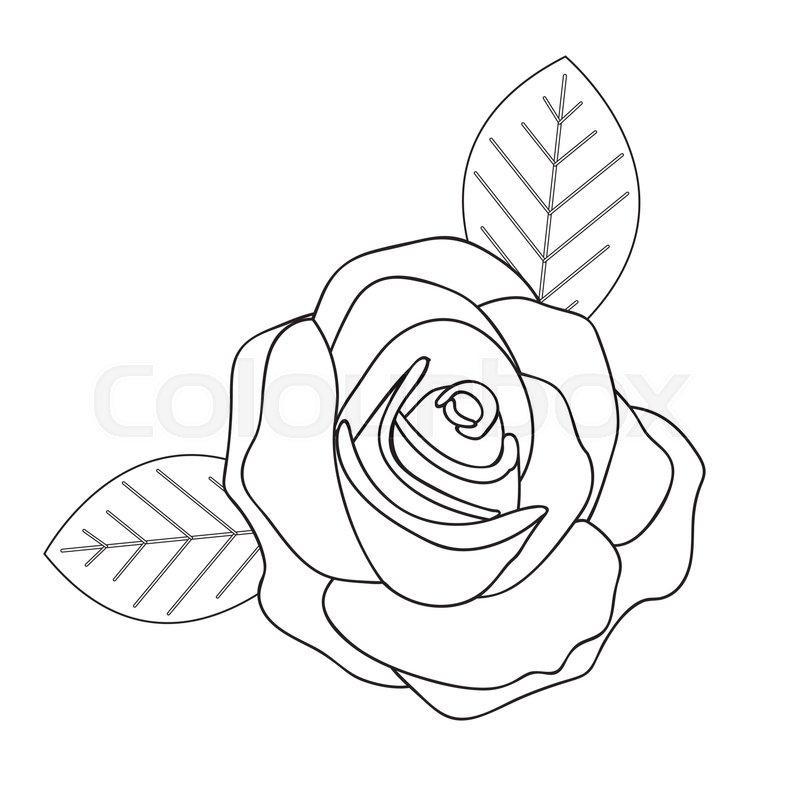 Rose Line Drawings Of Flowers