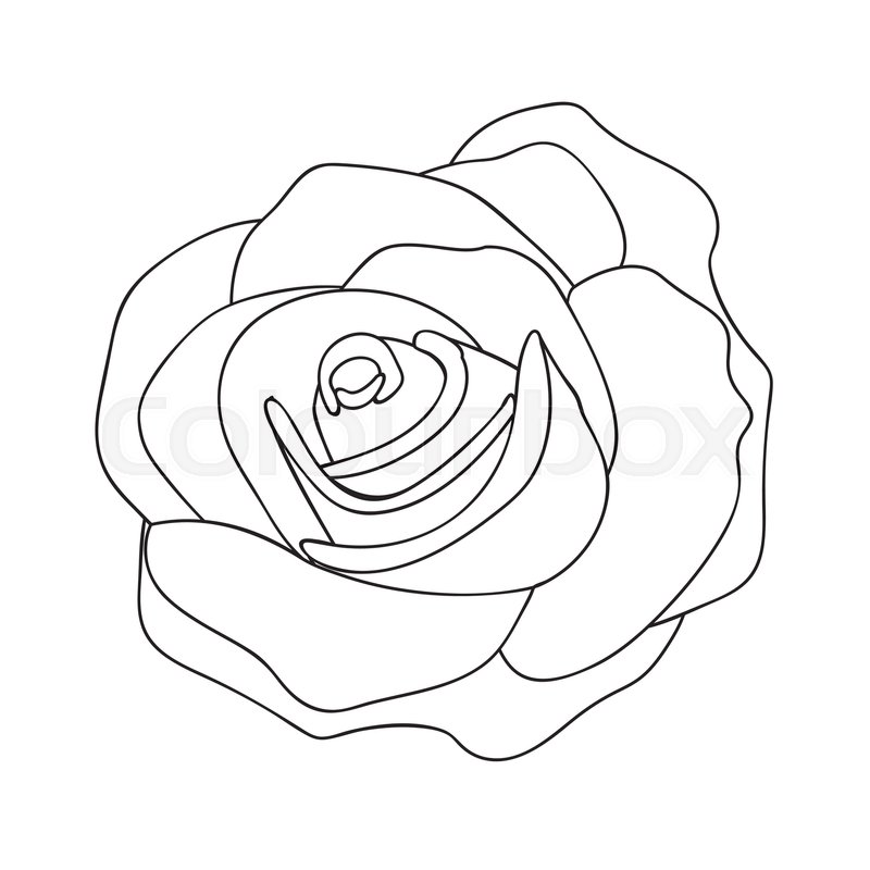Line Drawing Of A Rose : Rose line drawing image vector illustration design stock