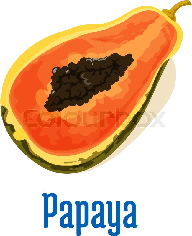 Papaya Half Cut Icon With Seeds Stock Vector Colourbox