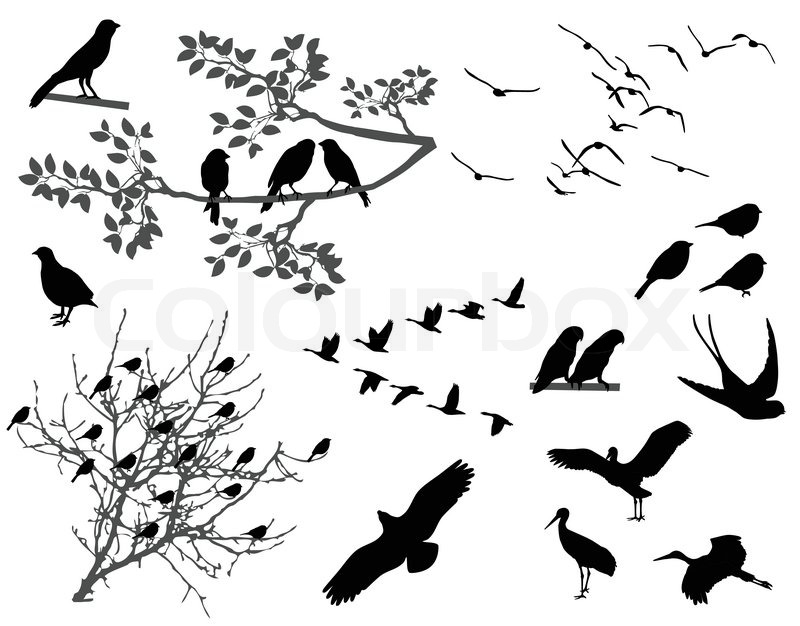 Flying Birds Silhouette Tree Silhouettes of Birds Flying