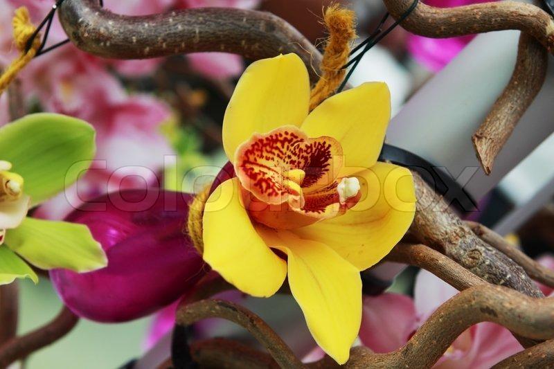 gelbe orchidee blume in lila vase auf dem baum stockfoto colourbox. Black Bedroom Furniture Sets. Home Design Ideas