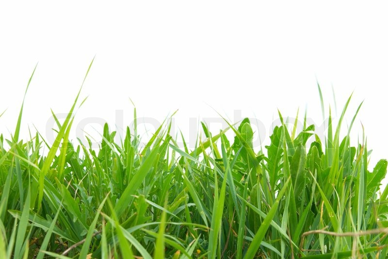 green grass isolated on the white background stock photo colourbox