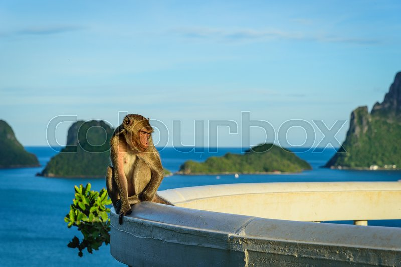 Stock image of 'Monkey lives in a natural forest of Thailand.'