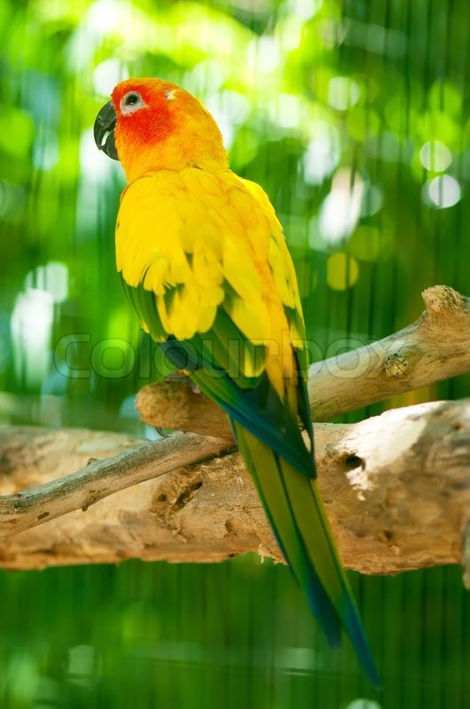 colourful parrot bird sitting on the perch stock photo colourbox