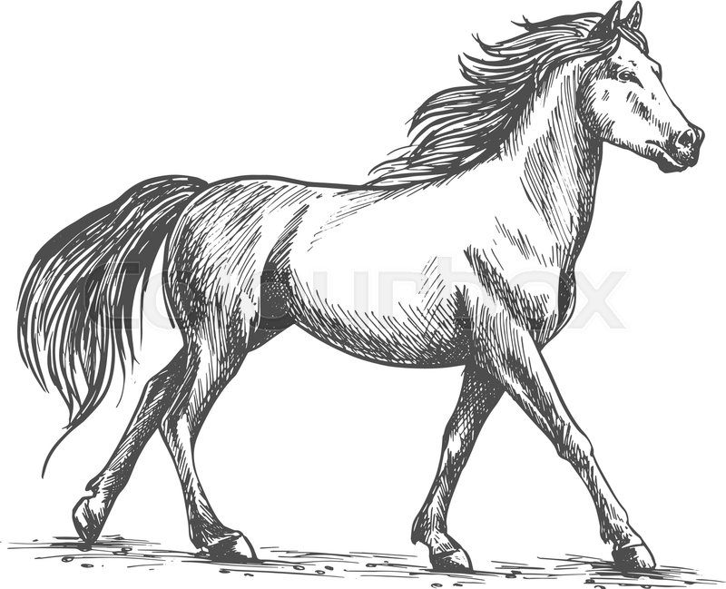 Proud white horse walks gracefully with its front hoof