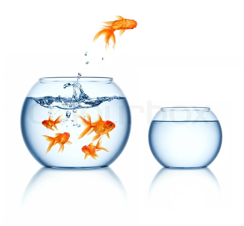 ein goldfisch springen aus dem goldfischglas stockfoto. Black Bedroom Furniture Sets. Home Design Ideas