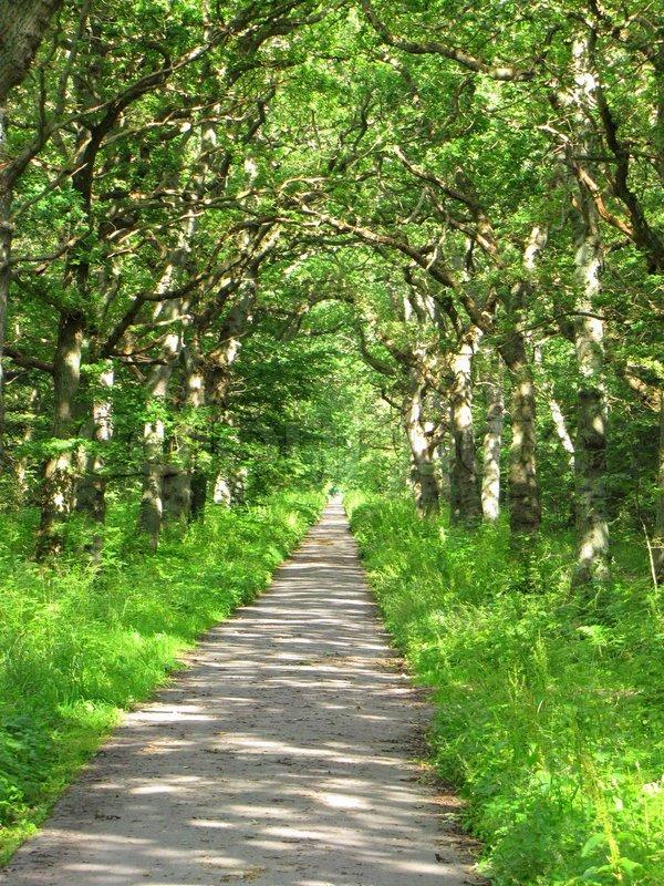 rabat skov eg Danske ordsprog på engelsk