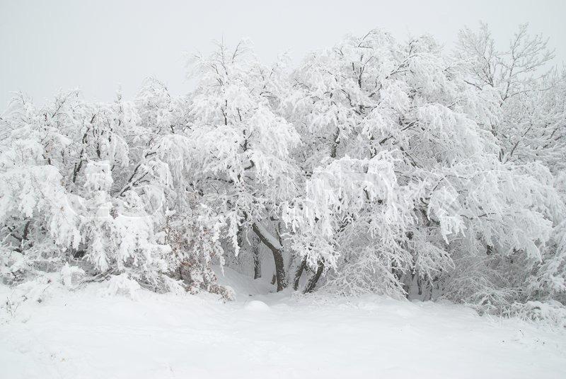 Black Box Christmas Trees