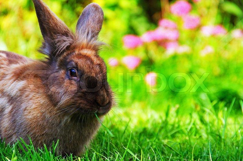 eine braune kaninchen im garten stockfoto colourbox. Black Bedroom Furniture Sets. Home Design Ideas