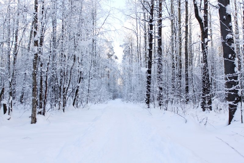 Panorama Of A Snow Covered Path In Stock Photo