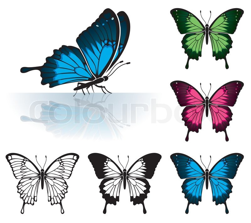 collect many coloured butterfly with a mirror reflection