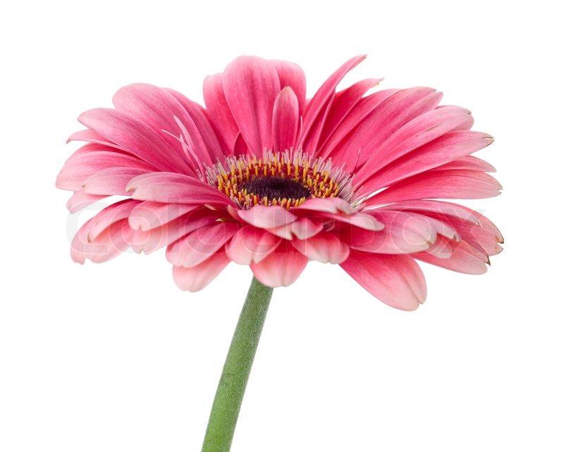 Цветок на стебельке