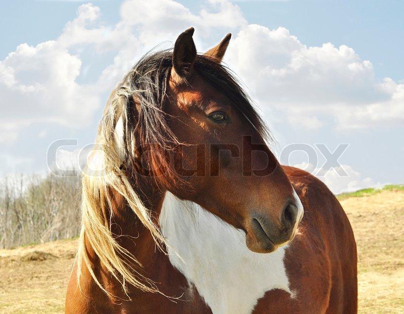 Horse close up