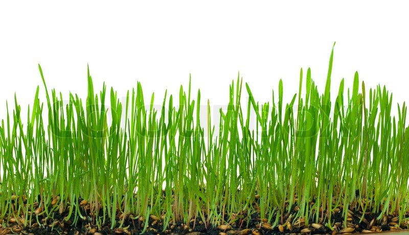 love grass how to grow
