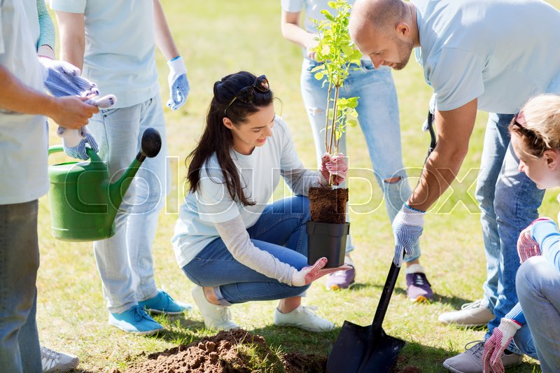 Volunteering, charity, people and ecology concept - group of happy volunteers planting tree and digging hole with shovel in park, stock photo