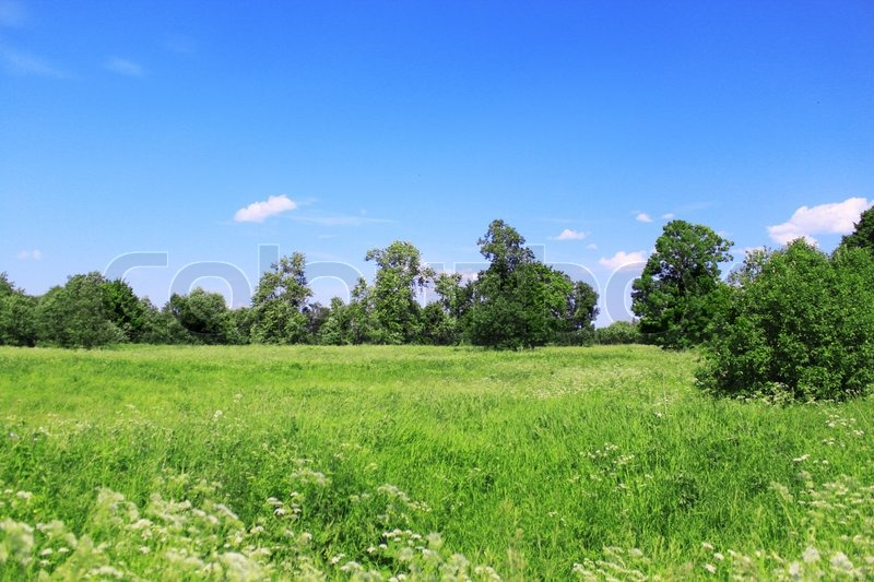 Beautiful Field Landscape With Blue Sky