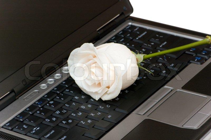 Попкорн (общество, политика) - Том L - Страница 3 2244920-white-rose-on-the-black-laptop-keyboard