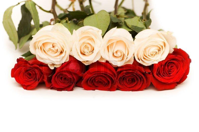 rote und wei e rosen auf wei em hintergrund stockfoto colourbox. Black Bedroom Furniture Sets. Home Design Ideas