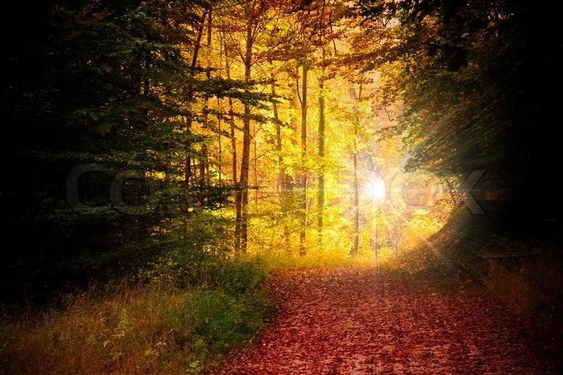 Stock foto af efterår skov i den lyse morgen