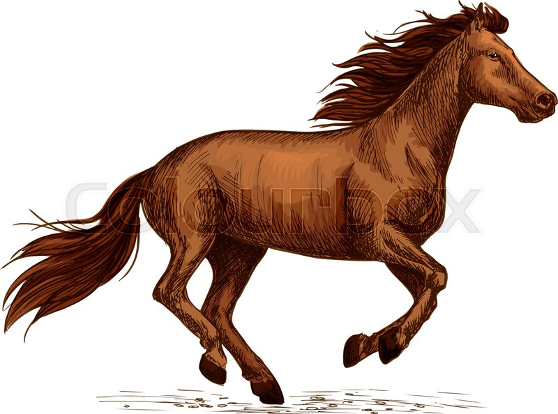 Horse Stallion Racing Sign Mustang Mare Running Freely Fast Sport
