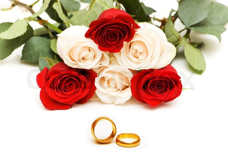 Roses and wedding rings isolated on the white Stock Photo Colourbox