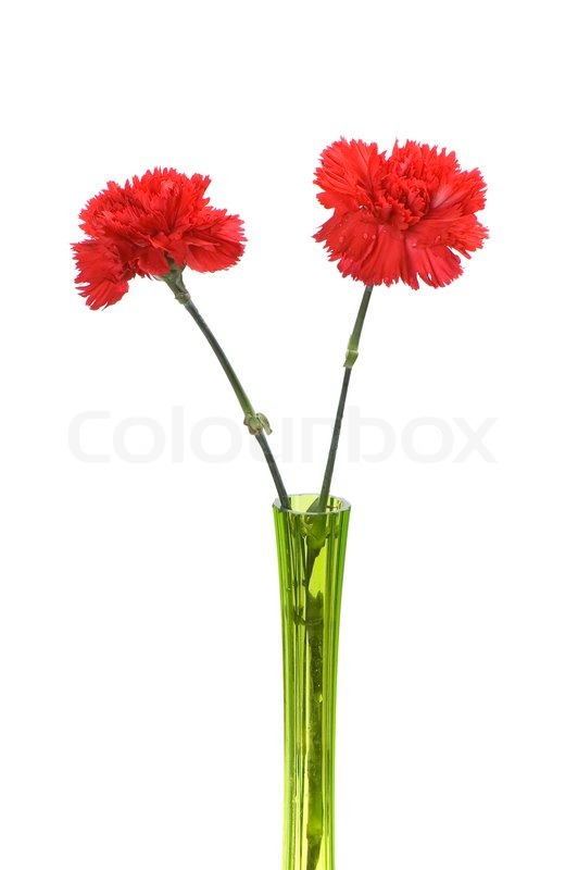 Stock image of 'Two red carnations in green vase isolated on white'