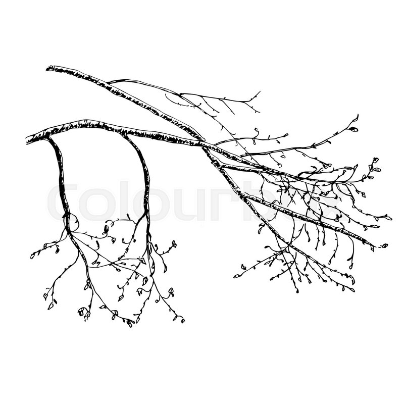 Vector hand drawn sketch illustration of tree s branch in spring ...