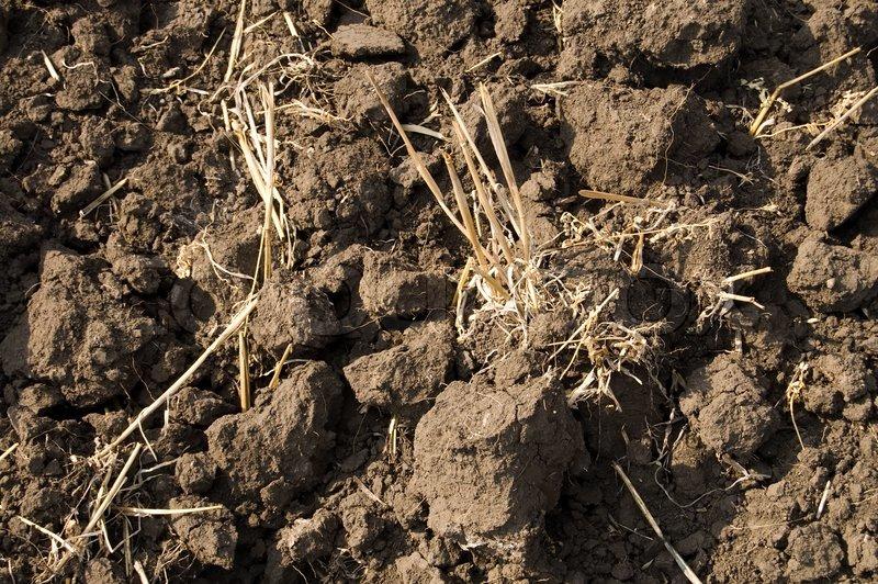 Bäume Für Trockenen Boden : angesichts der schwarzen erde trockenen boden als textur ~ Lizthompson.info Haus und Dekorationen