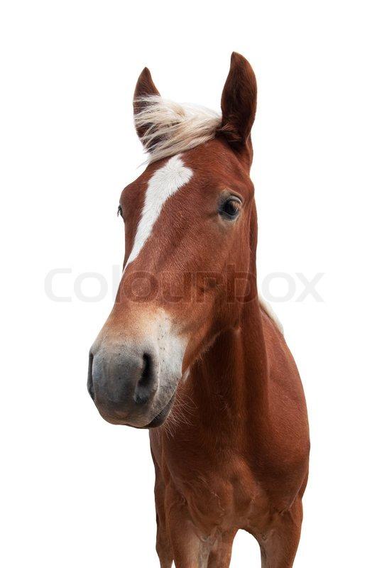 Rotes Pferd mit weißen maneisolated auf weißem Hintergrund ...