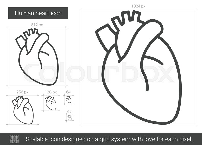 Vector Drawing Lines App : Human heart vector line icon isolated on white background