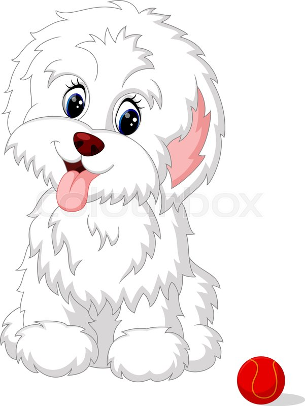 Cute White Lap Dog Puppy Posing Stock Vector Colourbox