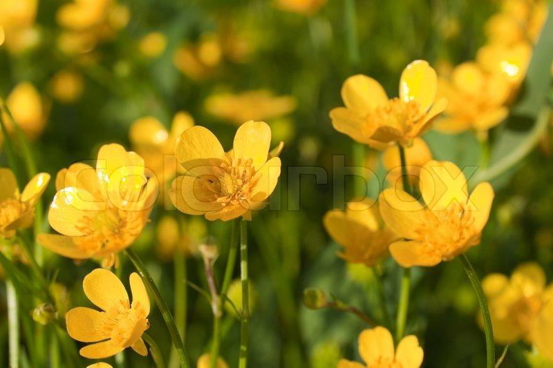 Kleine gelbe blumen stockfoto colourbox for Kleine fliegen blumen