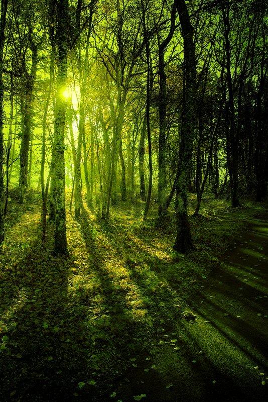 Stock foto af grøn skov i den lyse morgen