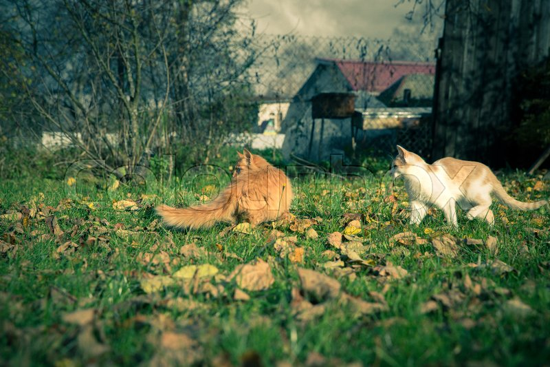 Two domestic cats among the grass and leaves at fall, stock photo