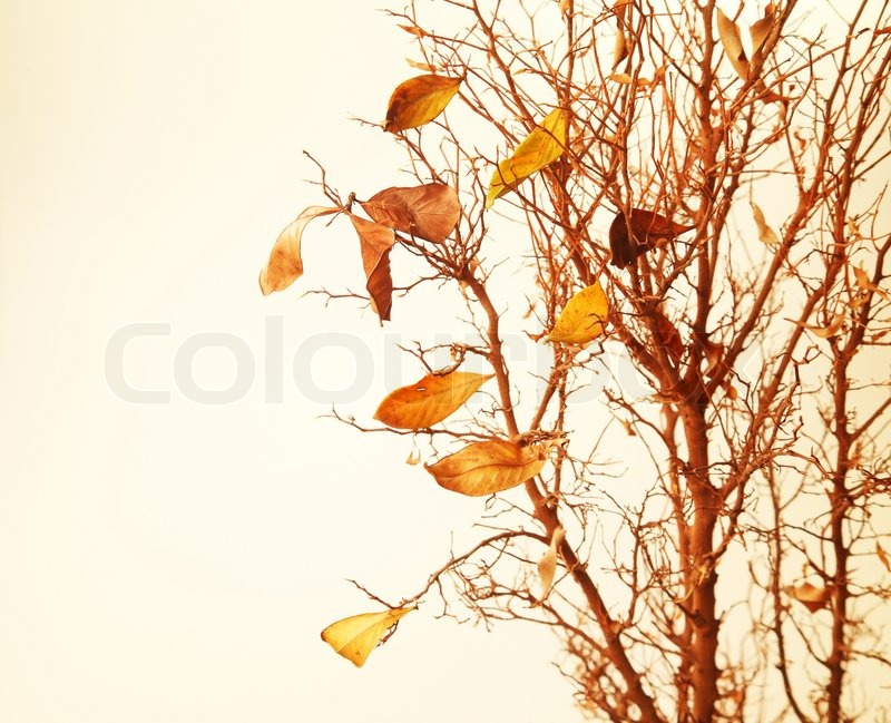 Autumnal tree branch with dry leaves | Stock Photo | Colourbox
