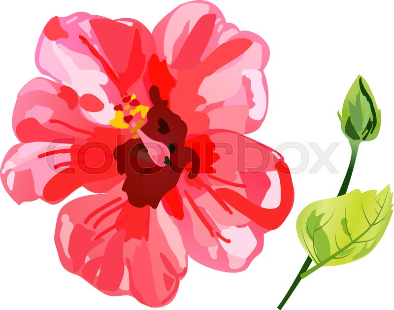 Red Watercolor Hibiscus Flower Vector Stock Vector Colourbox