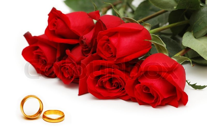 Red roses and rings isolated on the white background Stock Photo