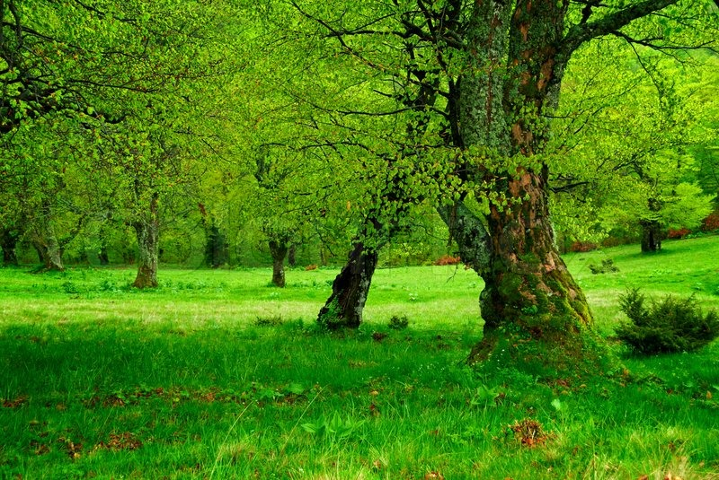 green tree forest - photo #5