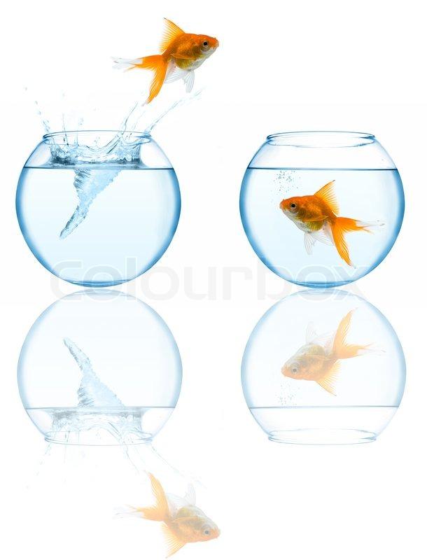 goldfisch im aquarium springen auf wei em hintergrund. Black Bedroom Furniture Sets. Home Design Ideas