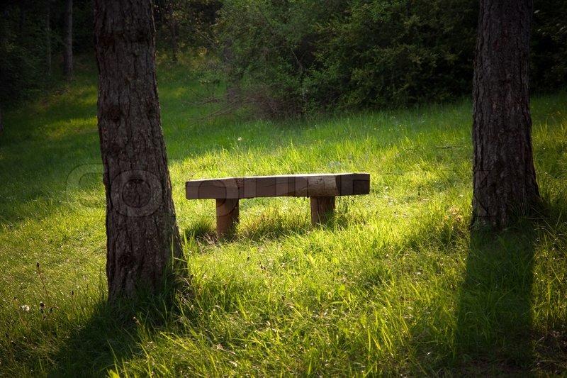 Stock foto af 'en bænk i skoven under den lyse morgen'
