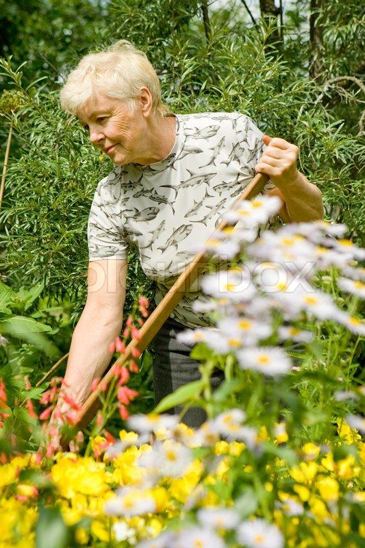 Den ældre kvinde arbejder i en have blandt blomster i en sommer ...
